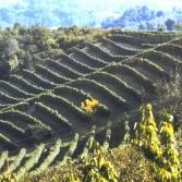 winnice02